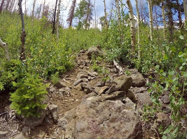Bushy, rocky, steep trail.  Phil Lowry photo