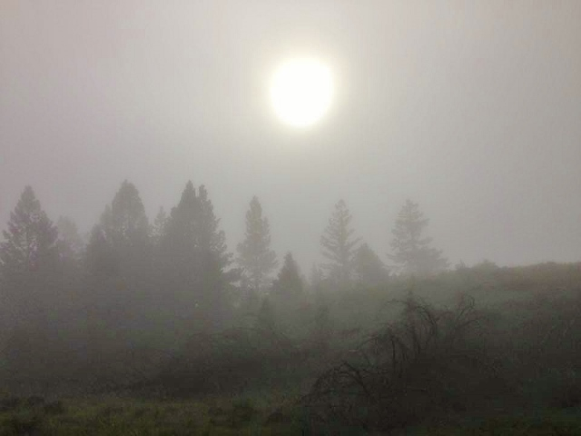 The fog - Sam Jewkes photo